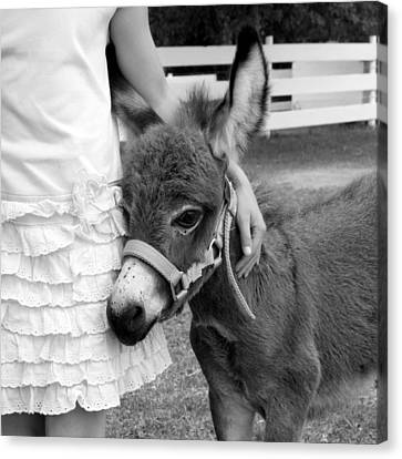 Girl And Baby Donkey Canvas Print by Brooke T Ryan