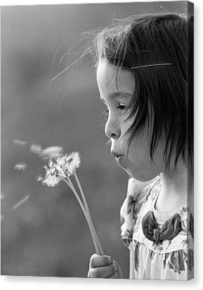 Blows Air Canvas Print - Girl Blowing On Dandelion C.1970s by H. Armstrong Roberts/ClassicStock