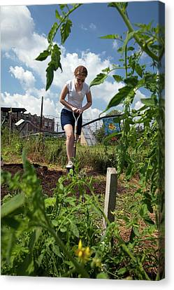 Girl Digging In A Garden Canvas Print by Jim West