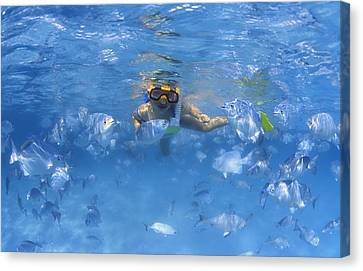 Girl Snorkeling In The Caribbean Canvas Print by Carson Ganci