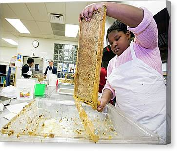 Beeswax Canvas Print - Girl Uncapping Honeycomb by Jim West