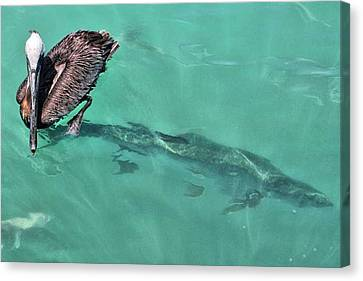 Canvas Print featuring the photograph Give A Guy Some Room by Rosemary Aubut
