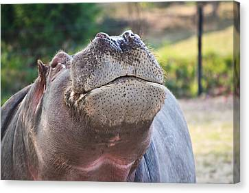 Canvas Print featuring the photograph Give Me A Kiss Hippo by Eti Reid