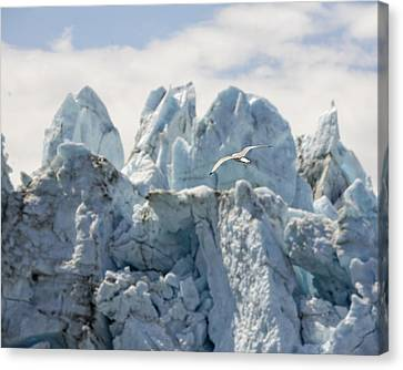 Glacial Flight Canvas Print by Vicki Jauron