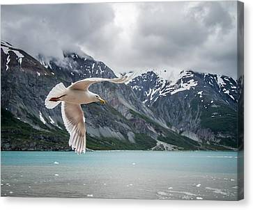 Glacier Bay Flyby Canvas Print by Randy Turnbow