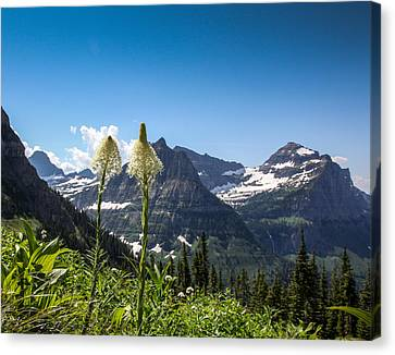 Glacier Grass Canvas Print