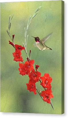 Glad Hummingbird Canvas Print by Angie Vogel