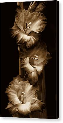 Gladiola Flowers Evening Light In Sepia Canvas Print by Jennie Marie Schell
