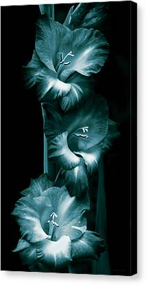 Gladiola Flowers Evening Light In Teal Canvas Print