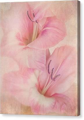 Gladiola IIi Canvas Print by David and Carol Kelly