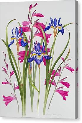 Pinks And Purple Petals Canvas Print - Gladiolus And Iris Sibirica by Sally Crosthwaite