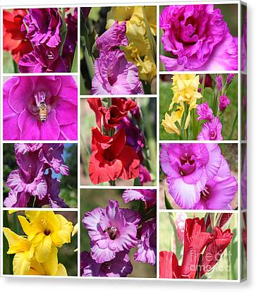 Gladiolus Collage Canvas Print