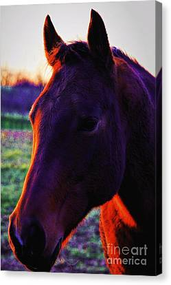 Canvas Print featuring the photograph Glamour Shot by Robert McCubbin