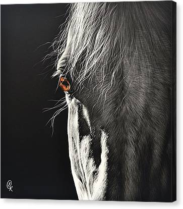 Glance Canvas Print by Elena Kolotusha