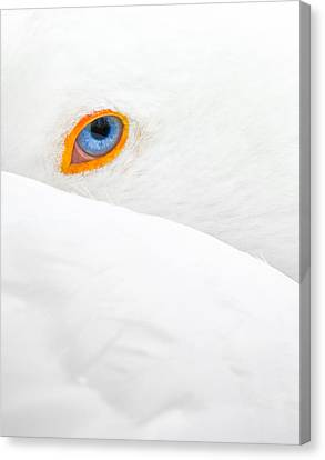 Glance Canvas Print by Jean-luc Besson