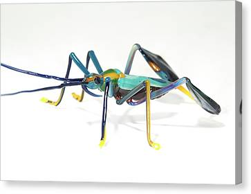 Glass Insect Canvas Print
