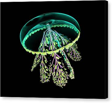 Jellyfish Canvas Print - Glass Jellyfish Model by Dan Sykes/natural History Museum, London