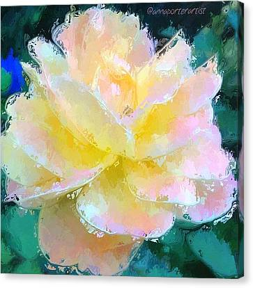 Glazed Pale Pink And Yellow Rose  Canvas Print