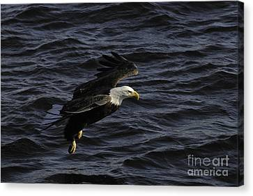 Gliding Along Canvas Print by Robert Smice
