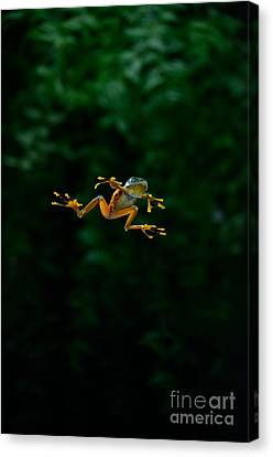 Gliding Frog In Flights Canvas Print by Scott Linstead