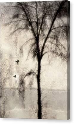 Glimpse Of A Coastal Pine Canvas Print by Carol Leigh