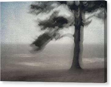 Glimpse Of Coastal Pine Canvas Print by Carol Leigh
