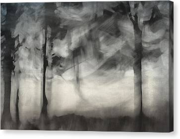 Glimpse Of Coastal Pines Canvas Print by Carol Leigh