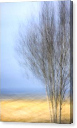 Glimpse Of Trees Sand And Beach Canvas Print