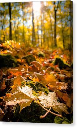 Glistening Autumn Dew Canvas Print