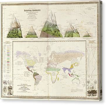 Global Botanical Geography Canvas Print