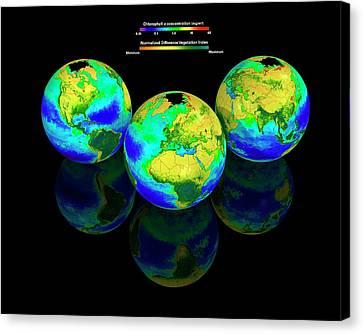 Global Chlorophyll Distribution Canvas Print