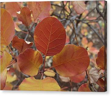Glories Of Autumn Canvas Print by James Rishel