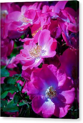 Glorious Blooms Canvas Print
