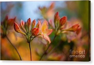 Glorious Orange Blooms Canvas Print by Mike Reid