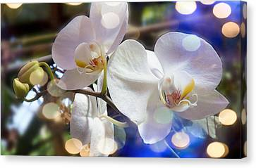 Glorious Orchids Canvas Print