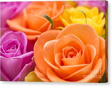 Close Focus Floral Canvas Print - Glorious Roses by Anne Gilbert