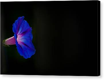 Canvas Print featuring the photograph Glorious Simplicity by Cheryl Baxter