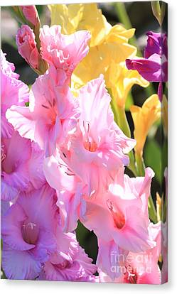 Glorious Summer Gladiolus Canvas Print