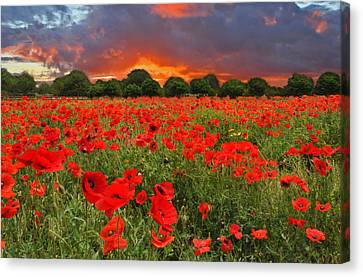 Glorious Texas Canvas Print