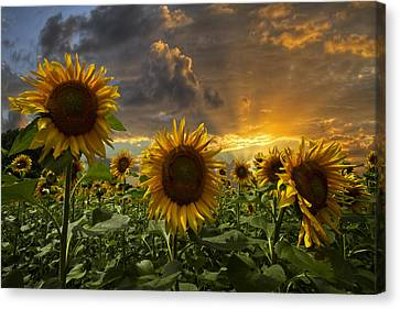Tropical Sunset Canvas Print - Glory by Debra and Dave Vanderlaan