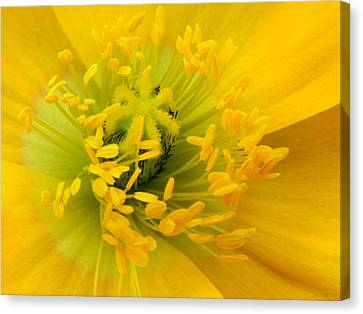Canvas Print featuring the photograph Glory Of Nature by Deb Halloran