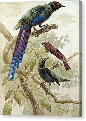 Glossy Starlings Canvas Print by English School