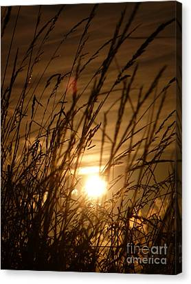 Glow Through The Grass Canvas Print