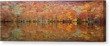 Glowing Autumn Canvas Print by Sho Shibata