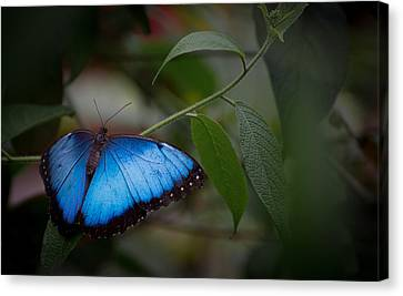 Glowing Blue Canvas Print by Penny Lisowski