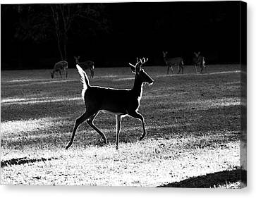Canvas Print featuring the photograph Glowing Buck by Lorna Rogers Photography