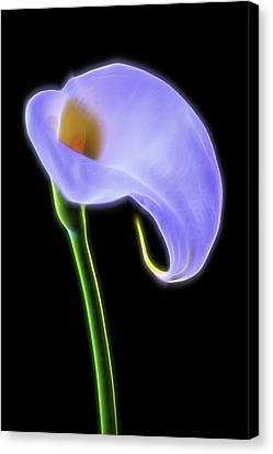 Glowing Calla Lily Canvas Print by Garry Gay