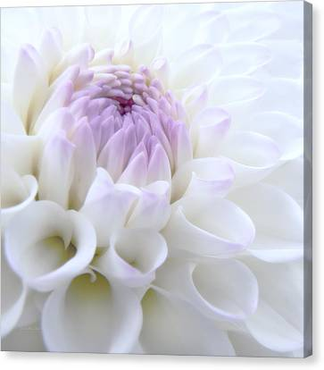 Glowing Dahlia Flower Canvas Print by Jennie Marie Schell