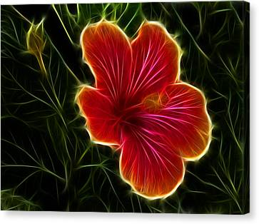 Glowing Hibiscus Canvas Print by Shane Bechler