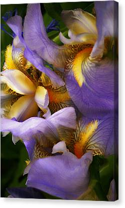 Glowing Iris' Canvas Print by Susan  McMenamin